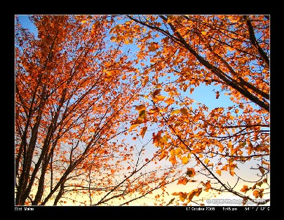 beautiful_side_of_fall_by_photographybyishs.jpg