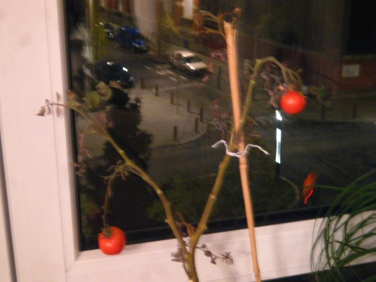 tomatoes-251108-001
