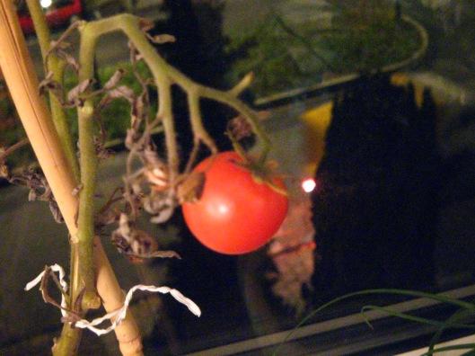 tomatoes-251108-002