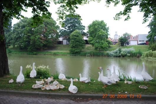 Εξι χηνο-οικογενειες κανουν καμπινγκ στο παρκο