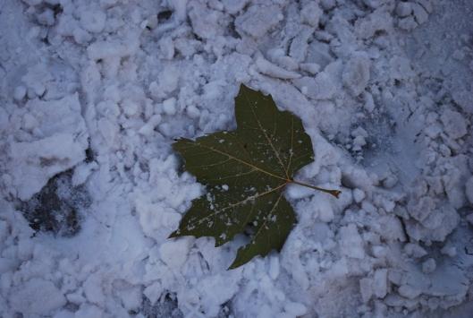 ένα φύλλο στο χιόνι